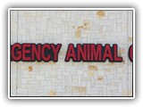 animal_emergency